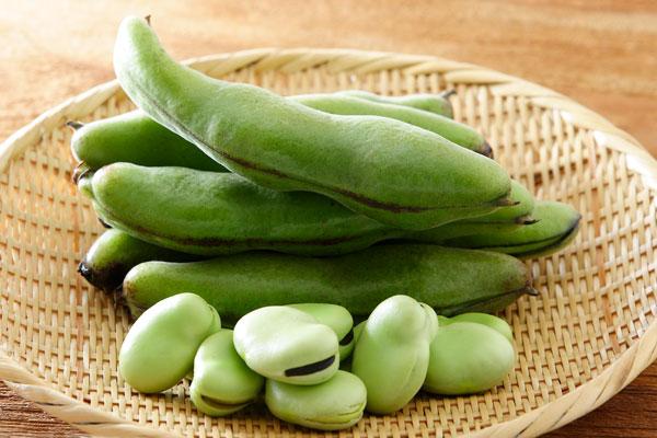 そら豆、育てます