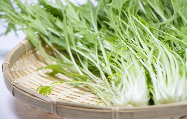冬の寒さも大丈夫!水菜とカラシナをプランター菜園しました